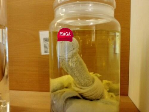 penis in a jar 03